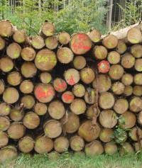 Holzaufnahme Fichte Stammholz