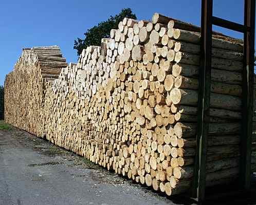 Papierholz