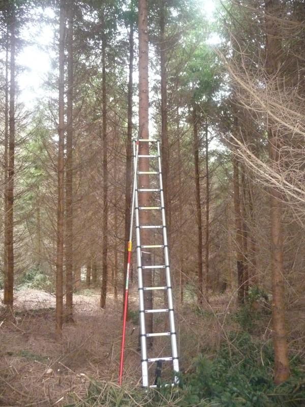 Alu-Teleskopleiter im Einsatz bei der Hochentastung - Bild: Wald-Prinz.de