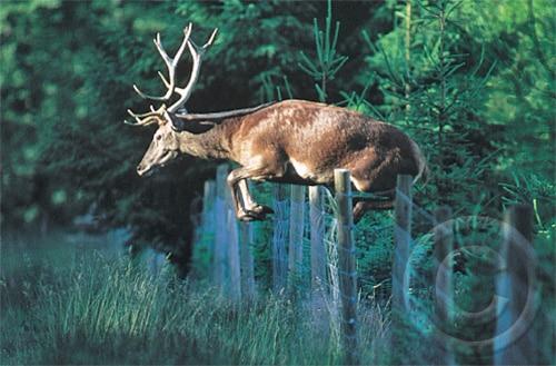 Sehr Wildzaun bauen: Schutz von Forstkulturen mit Knotengeflecht und Co VT14