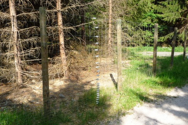 Knotengeflecht-Wildzaun (200/23/15) gegen Rotwild mit engem Pfostenabstand - Bild: Wald-Prinz