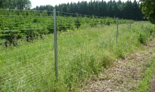 Bevorzugt Wildzaun bauen: Schutz von Forstkulturen mit Knotengeflecht und Co FS56