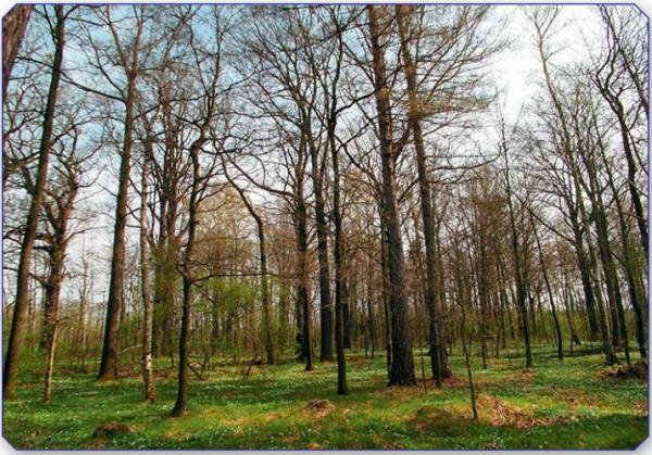 17,1 ha große Forstliegenschaft in Herrnhut/Sachsen - Bild: Auktionshaus Karhausen