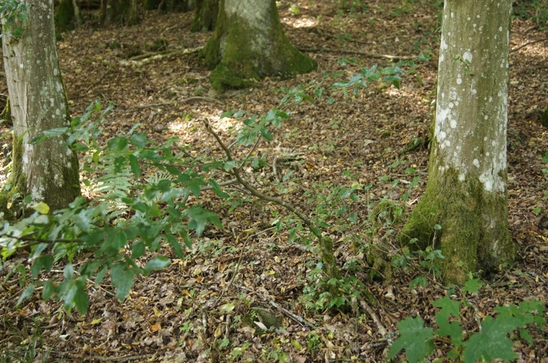 Grenzstein verschwunden? Nein, aber bestens überwachsen - Bild: Wald-Prinz