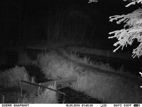 Nachtaufnahme einer Teichanlage; der Mobilfunkversand (via Email) dieses Bildes kostet in dieser Qualität weniger als 3 Cent - Bild: Wald-Prinz.de