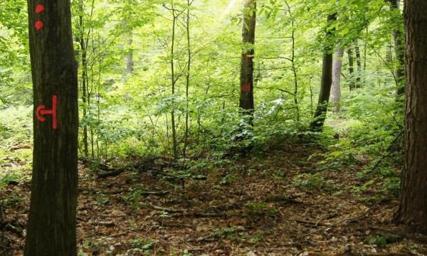Markierung des Grenzverlaufs - Bild: Wald-Prinz.de