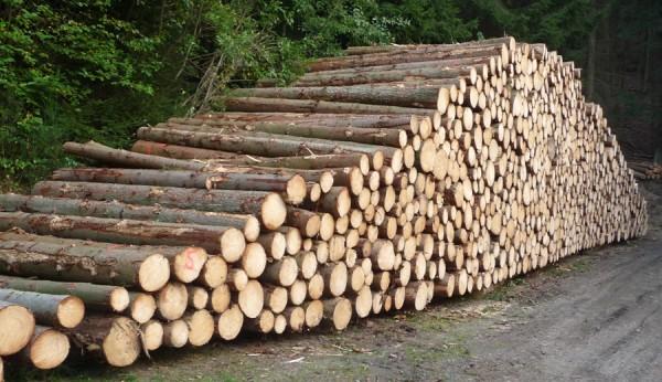 Riesen-Holzstapel und nur eine Zahl? Dieses Holz wurde mit einem Harvester aufgerabeitet. Alle Holzmaße inkl GPS-Daten wurden durch den Bordcomputer des Vollernters aufgenommen - Bild: Wald-Prinz.de