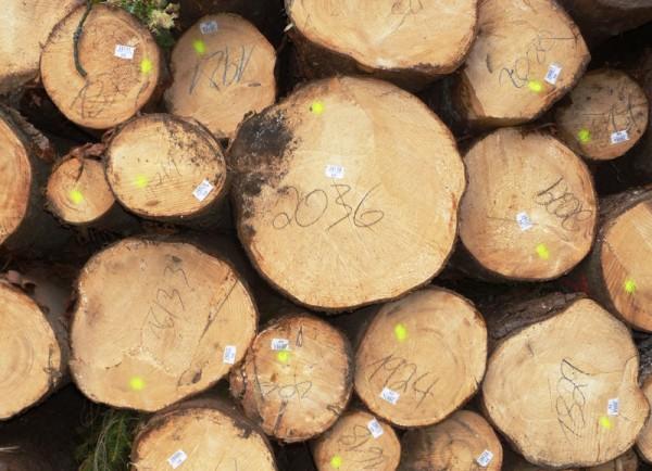 2036? Einfache Erklärung: 20 = Länge in m, 36 = Mittendurchmesser in cm; aus diesen beiden Angaben ergibt sich das Volumen bzw. der Festgehalt eines Stammes - Bild: Wald-Prinz.de