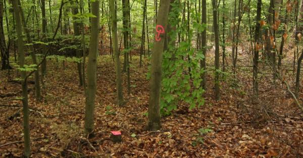 Pfeil nach unten? Damit wird oft in Augenhöhe auf einen Grenzstein hingewiesen - Bild: Wald-Prinz.de