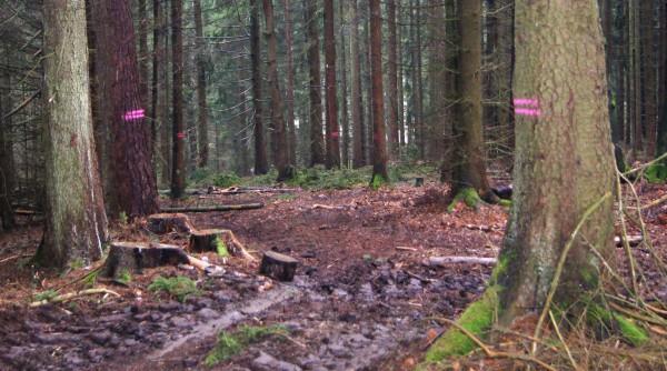 Markierung eines Rückewegs - Bild: Wald-Prinz.de