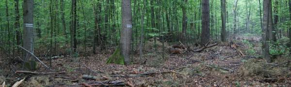 Durchgängige Markierung einer Rückegasse - Bild: Wald-Prinz.de