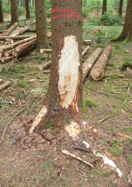 Rückeschaden an einer Rückegasse - Bild: Wald-Prinz.de