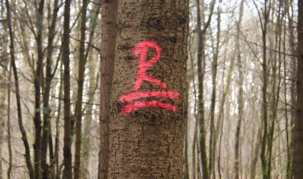 """""""R"""" wie Rückeweg bzw. Rückegasse - Bild: Wald-Prinz.de"""