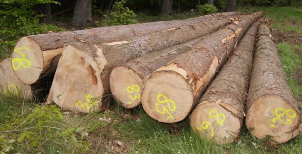 Mit Kreide wird Länge, Mittendurchmesser und Qualität auf der Stirnseite markiert, mit der Spraydose werden die Stämme für die Holzaufnahme durchnummeriert - Bild: Wald-Prinz.de