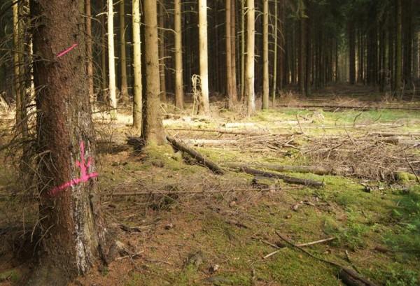 Forstmarkierung