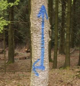 Andere Farbe, andere Form, gleicher Sachverhalt - Bild: Wald-Prinz.de