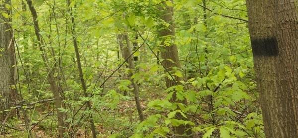 Soll eine Rückegasse nicht mehr benutzt werden, werden die Markierungen übermalt - Bild: Wald-Prinz.de