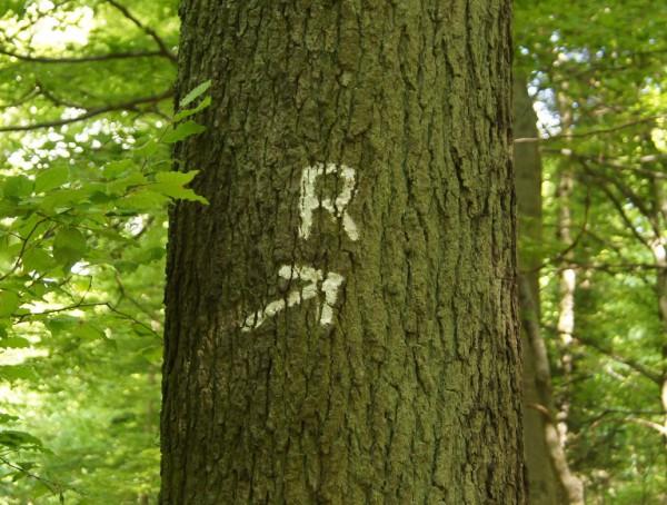 Rückegasse? Mitnichten! Hier handelt es sich um die Marklierung des Rheinsteigs - Bild: Wald-Prinz.de