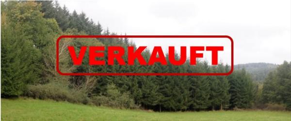 Am nördlichen Rand grenzt das Waldstück an eine Wiese; im Hintergrund links ist der benachbarte schützende Douglasien-Hochwald zu erkennen – Bild: Wald-Prinz.de