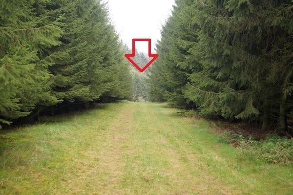 Die Zufahrt endet in einer Wiese - Bild: Wald-Prinz.de