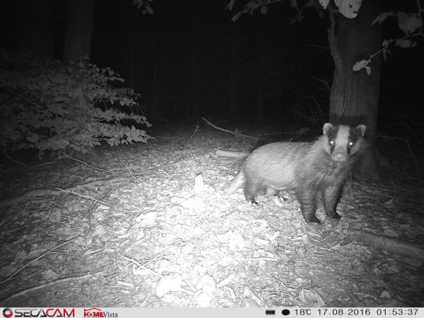 Gestochen scharfe Fotos einer SecaCam HomeVista trotz stockdunkeler Nacht - Bild: Wald-Prinz,de