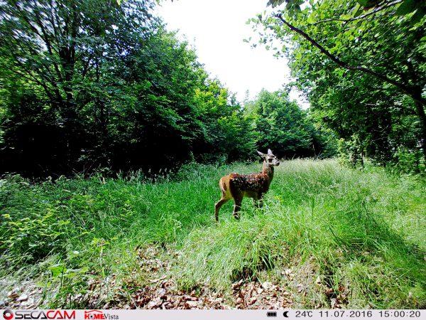 """Die gleiche Szene wie oben, nun aber mit der SecaCam Weitwinkel-Kamera """"HoemVista"""" aufgenommen - Bild: Wald-Prinz.de"""