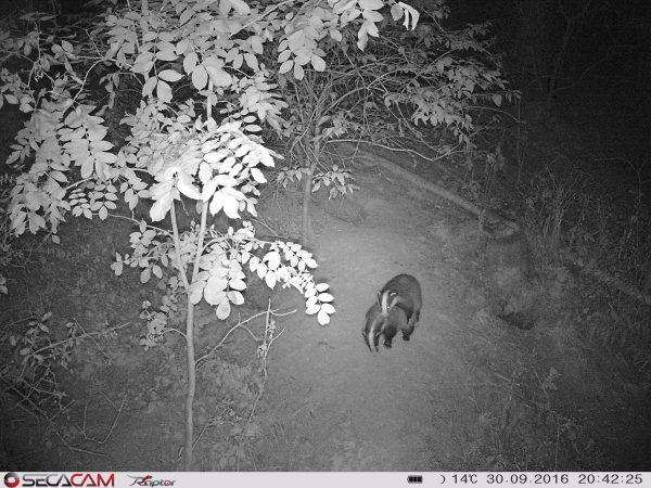 Unsichtbare 940 nm-LEDs und gestochen scharfe Nachtaufnahmen? Das schaffen aktuell nur die SecaCams, hier die Raptor mit 52°-Normalobjektiv - Bild: Wald-Prinz.de