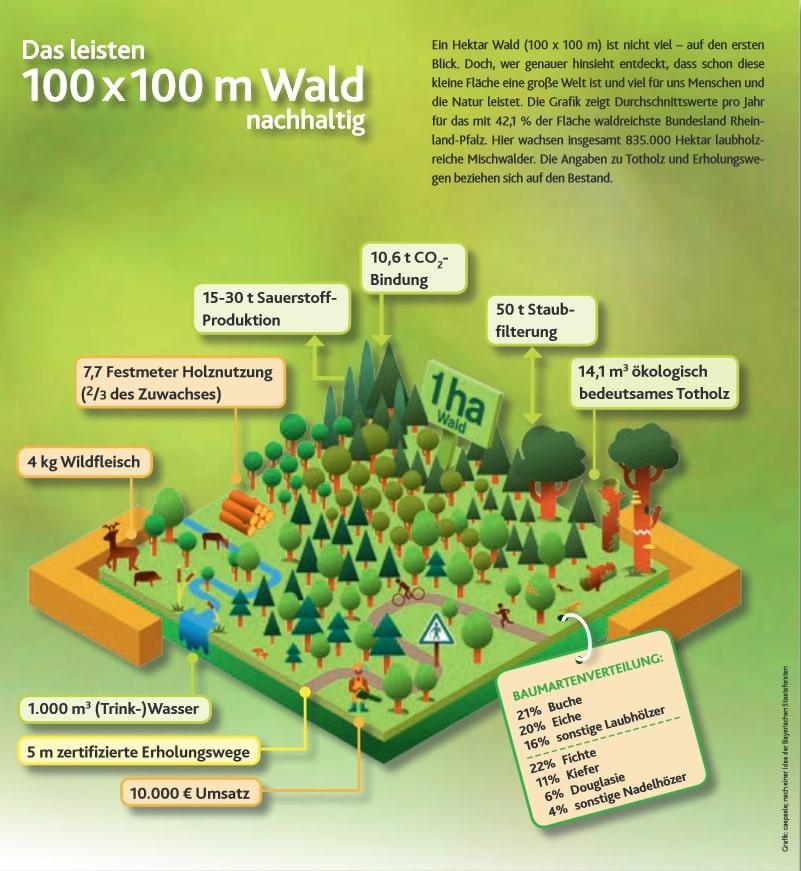1ha Wald Holzzuwachs