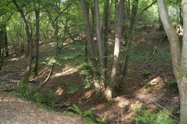 Blick in den Wald - Bild: Wald-Prinz.de