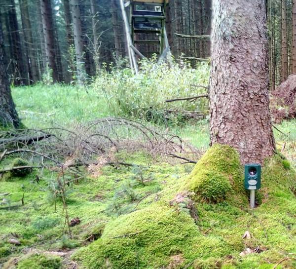 Das LIDL Ultraschallgerät hat im Wald nicht den erhofften Erfolg gebracht. Die kleine Douglasie wurde trotz hochfrequenter Töne und Blitzen zu Tode gefegt - Bild: Wald-Prinz.de