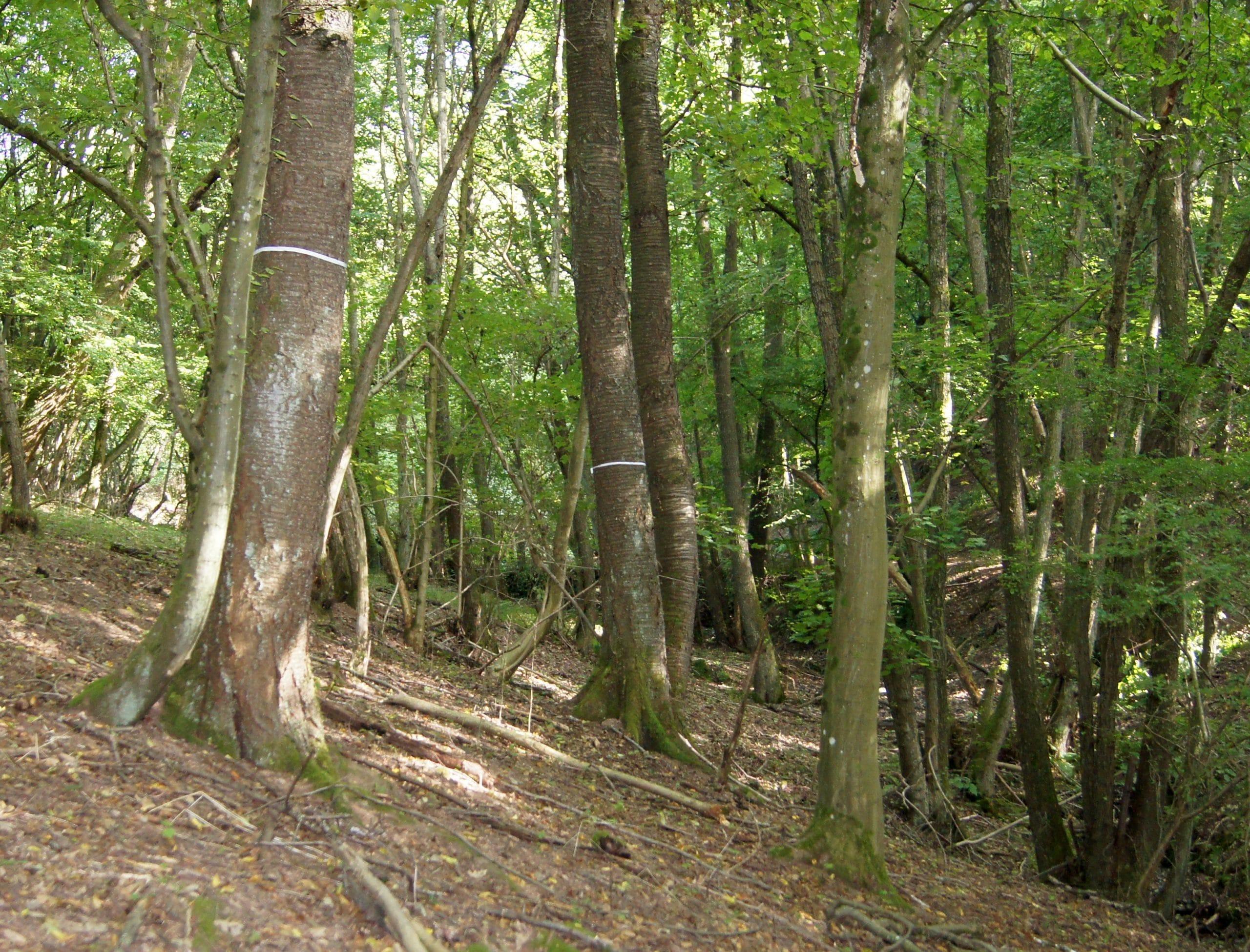 waldgrundstück mischwald nähe trier 0,85 ha | wald-prinz.de