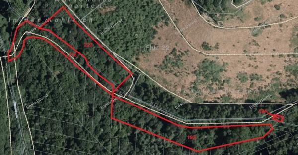 Waldstück Pellingen