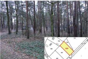 """Ist dieses Waldstück in Zernsdorf 6,42/m wert? Dem """"Gewinner"""" der Auktion war es das - Bild: Karhausen AG"""