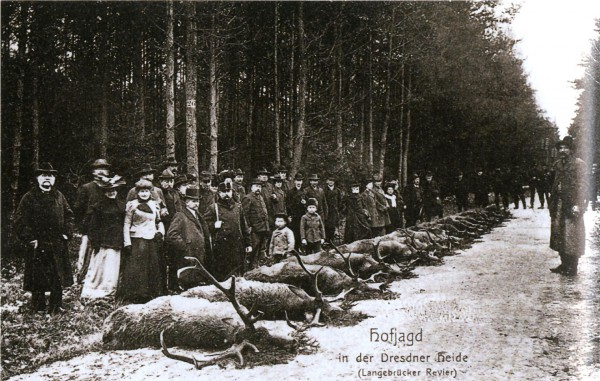 Albert, König von Sachsen posiert vor der Jagdstrecke der Hofjagd in der Dresdner Heide - Bild: Postkarte von G.H. Rehfeld & Sohn