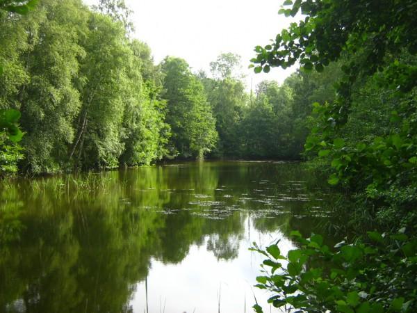 Der wenige hundert Meter lange Rest des abgebrochenen Projektes eines Küstenkanals vom Breitling zum Saaler Bodden im Wald der Rostocker Heide südlich des Dorfes Torfbrücke - Bild: Wikipedia