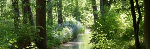 Der Staftwald Augsburg ist der größte Stadtwald Bayerns - Bild: Stadt Augsburg