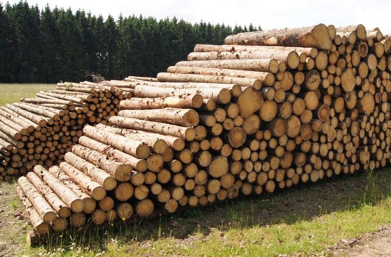 Holzpreise Und Holzpreisentwicklung Fichte Wald Prinzde