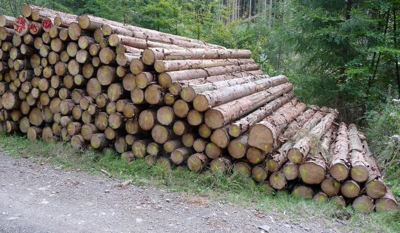 Top Holzpreise und Holzpreisentwicklung Fichte | Wald-Prinz.de #QW_65